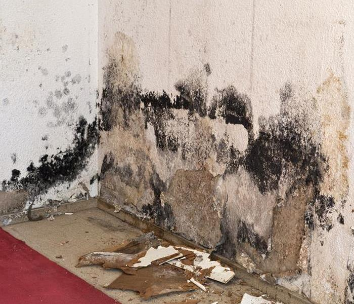 Mold Remediation Types of Mold