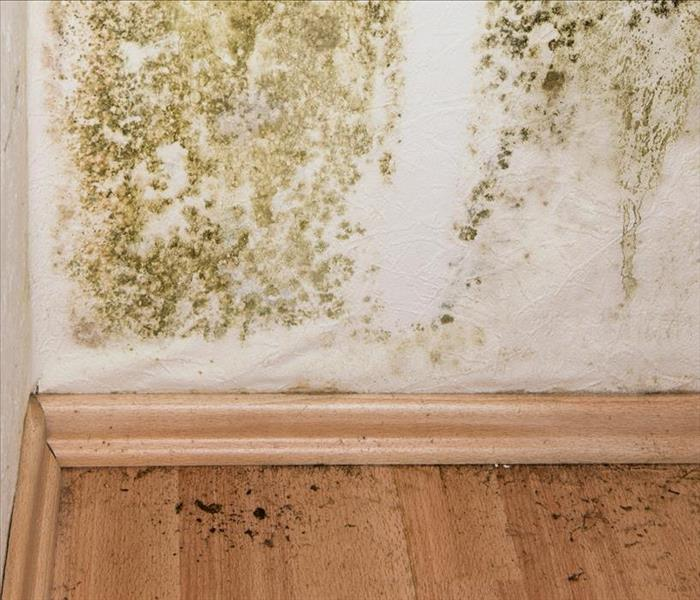 Mold Remediation Mold Remediation Services in St. Petersburg